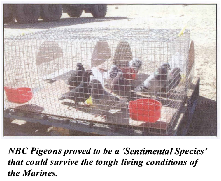 """MIKE & MIKE:  chickens at Chemical Weapons detectors during """"The March Up"""" to Baghdad?"""