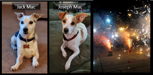 NEWS & COMMENTARY: was it the Holy Spirit or the Benadryl that calmed my dog Jack down during the fireworks insanity on Saturday?